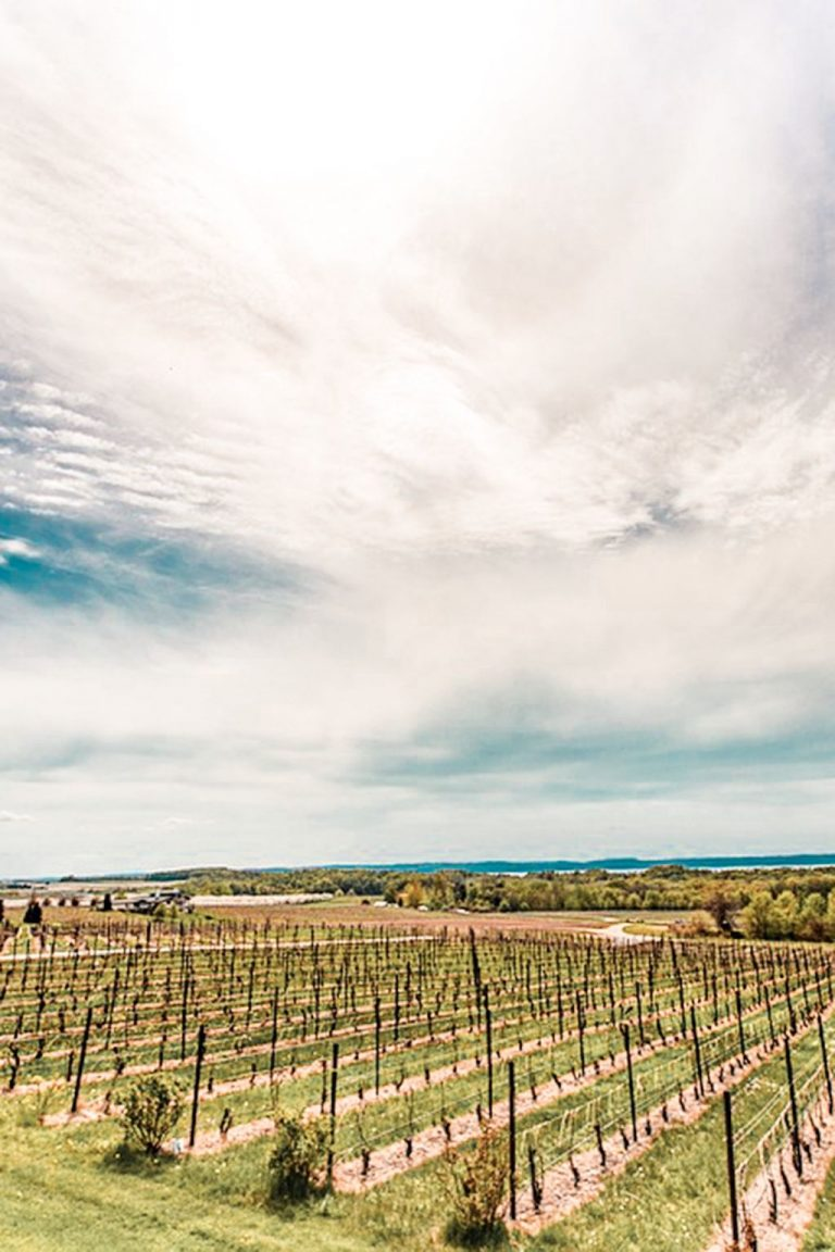 🇺🇸 7 Outstanding Traverse City Wine Tours