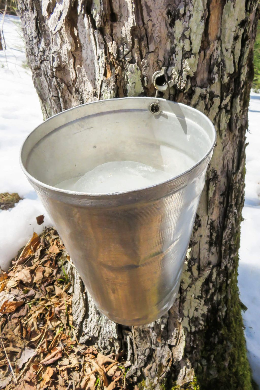 how is maple syrup made