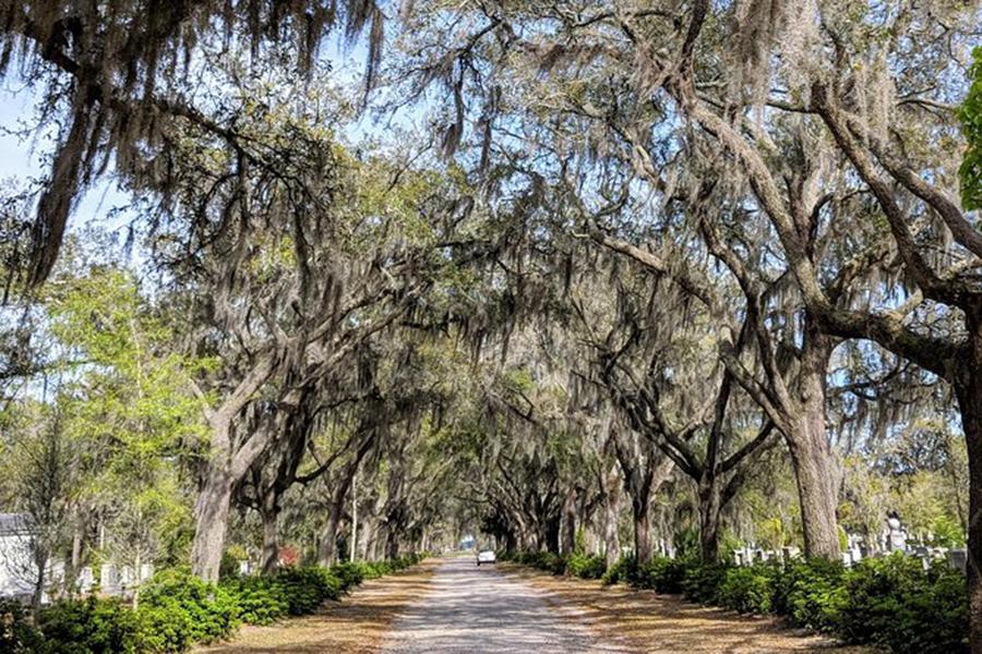 savannah plantation tours