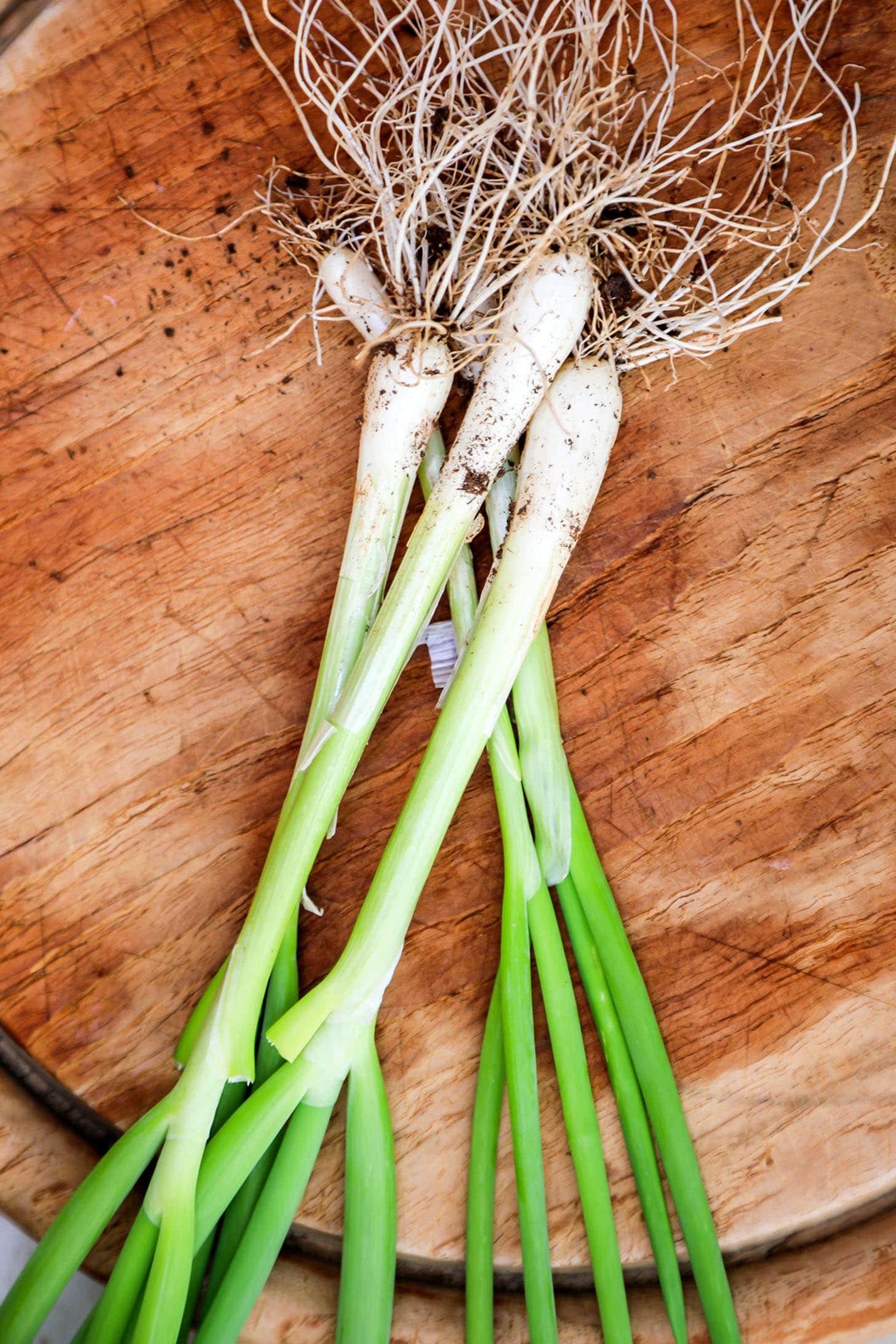 Scallions_vs_Green_Onions_1