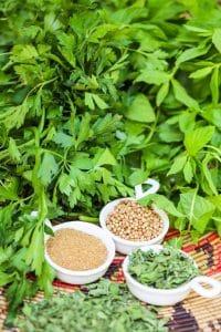 fresh vs dried herb